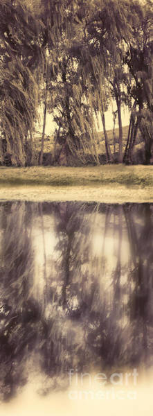 Riverside Photograph - Riverside Trees by HD Connelly