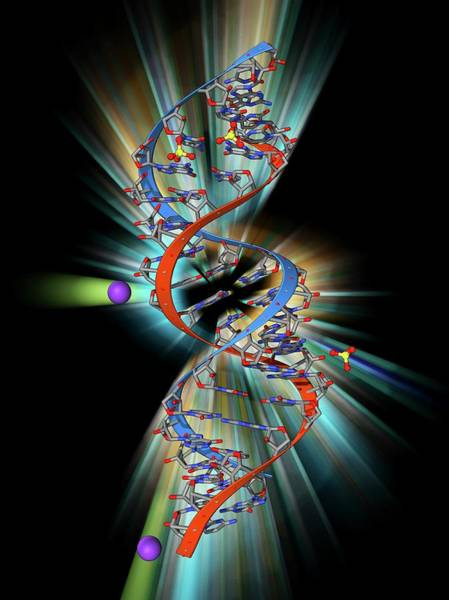 Double Helix Photograph - Rna Triplet Repeat Expansion by Laguna Design