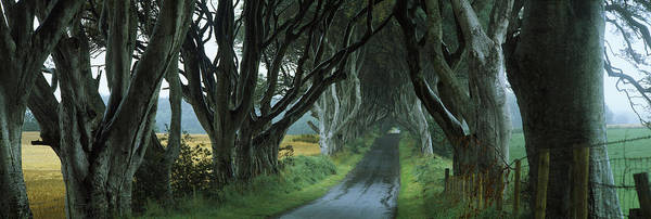 County Antrim Wall Art - Photograph - Road At The Dark Hedges, Armoy, County by Panoramic Images
