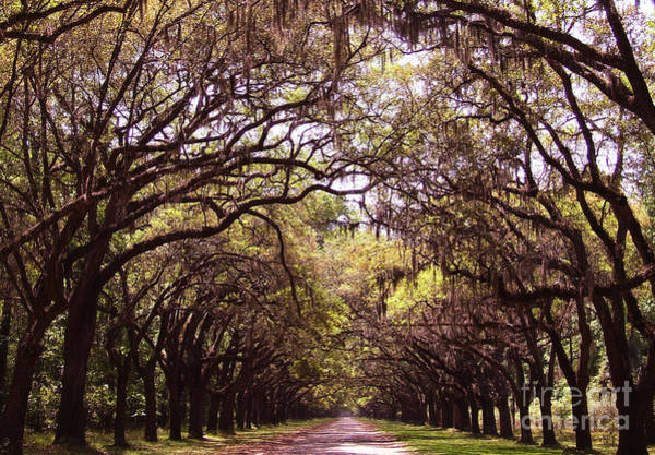 Photograph - Road Of Trees by Andrea Anderegg