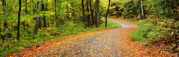 Vt Wall Art - Photograph - Road Passing Through A Forest, Country by Panoramic Images
