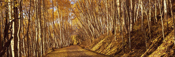 Peacefulness Photograph - Road Passing Through A Forest by Panoramic Images