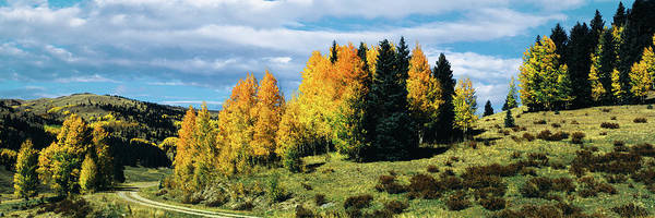 Chama Photograph - Road Passing Through Aspen Grove by Panoramic Images