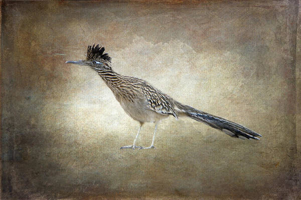 Photograph - Road Runner by Betty  Pauwels
