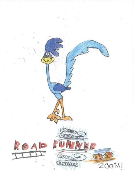 Drawing - Road Runner by Fred Hanna