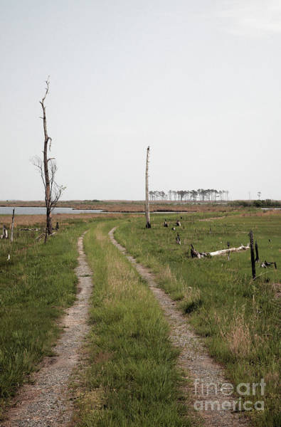 Photograph - Road Through Blackwater Wildlife Refuge In Maryland by William Kuta