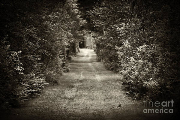 Winding Roads Photograph - Road Through Forest by Elena Elisseeva