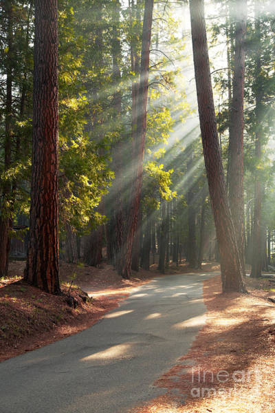 Redwoods Photograph - Road Through Mariposa Grove by Jane Rix