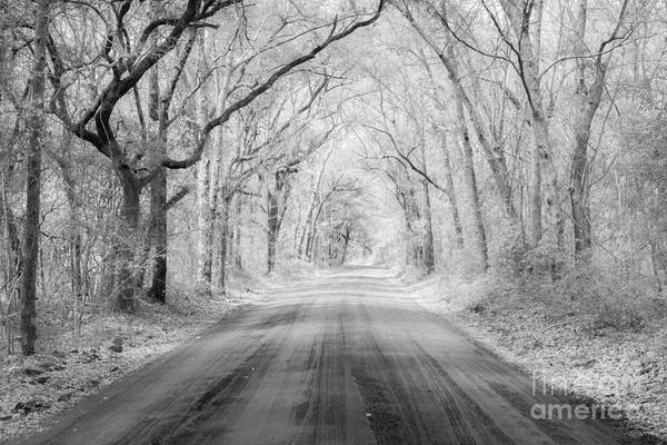 Photograph - Road To Angel Oak In Infrared by Dale Powell