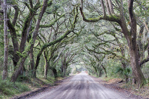 Photograph - Road To Botany Bay by Jim Dollar