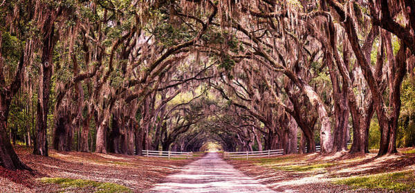 Photograph - Road To The South by Renee Sullivan