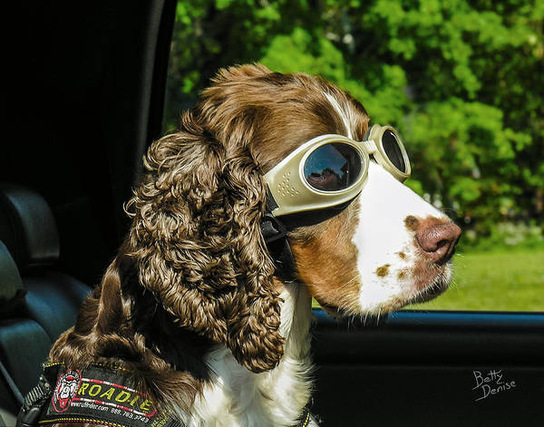 Cocker Spaniel Photograph - Roadie by Betty Denise
