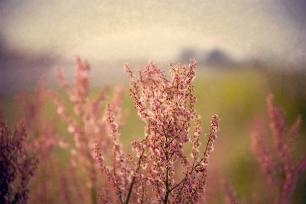 Photograph - Roadside Beauty by Beverly Stapleton