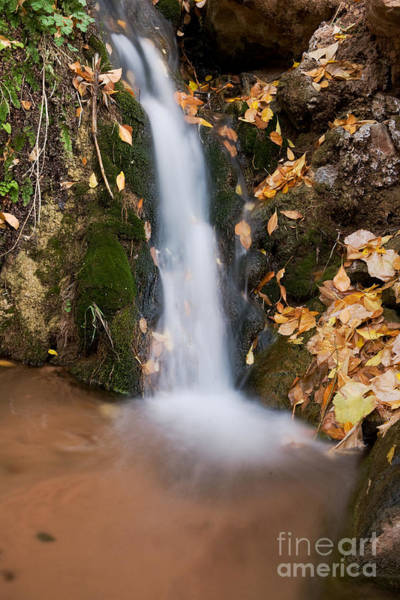 Photograph - Roadside Stream by Fred Stearns