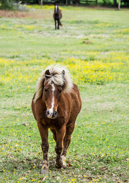 Steed Photograph - Roaming Through The Fields by Parker Cunningham