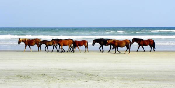 Foal Photograph - Roaming Wild And Free by Kim Galluzzo Wozniak