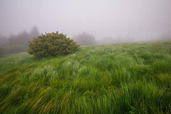 Bald Mountain Photograph - Roan Mountain Appalachian Trail Landscape Photography Windswept by Dave Allen