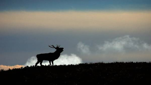 Photograph - Roaring Down The Glen by Macrae Images