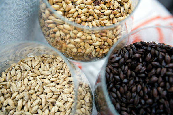 Economics Photograph - Roasted Barley For Brewing Beer by Adam Hart-davis/science Photo Library