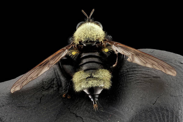 North American Wildlife Photograph - Robber Fly by Us Geological Survey