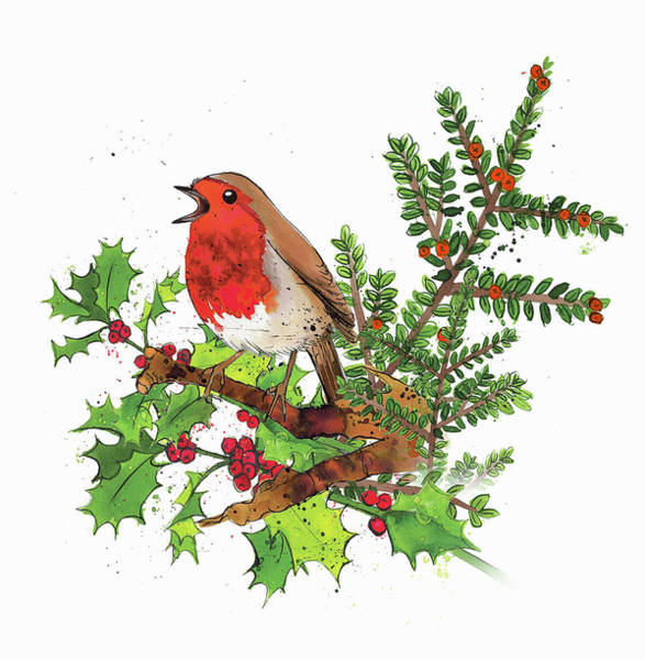 Wall Art - Photograph - Robin Redbreast Sitting On Sprig by Ikon Ikon Images