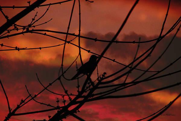 Photograph - Robin's Last Call by Ericamaxine Price