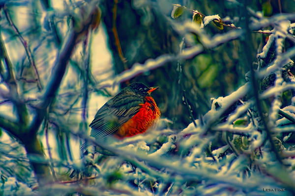 Photograph - Robins Patience Art by Lesa Fine