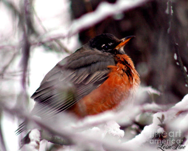 Photograph - Robins' Patience by Lesa Fine