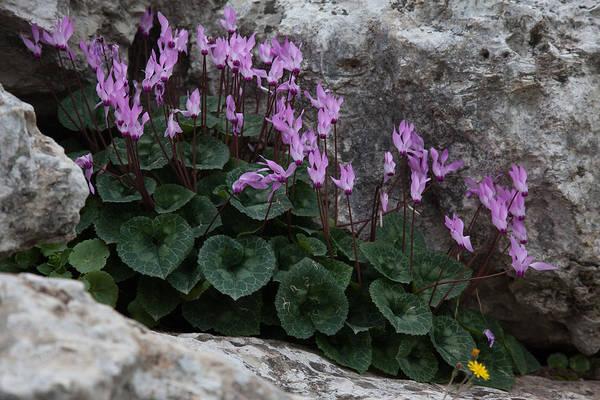 Photograph - Rock Bottom by Uri Baruch