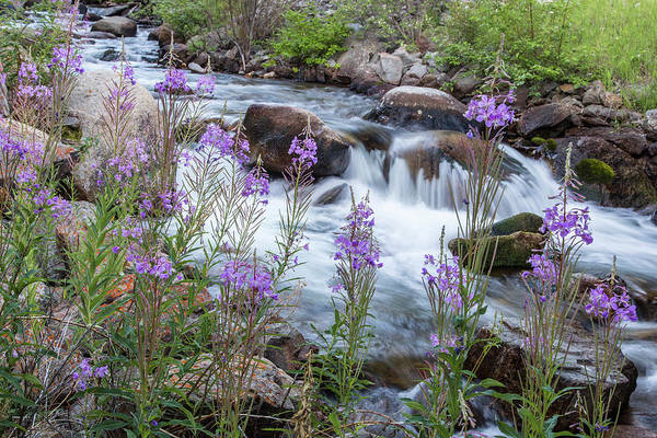 Fireweed Photograph - Rock Creek In The Pioneer Mountains by Chuck Haney