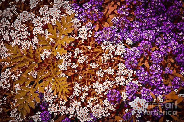 Wall Art - Photograph - Rock Cress Flowers by Elena Elisseeva