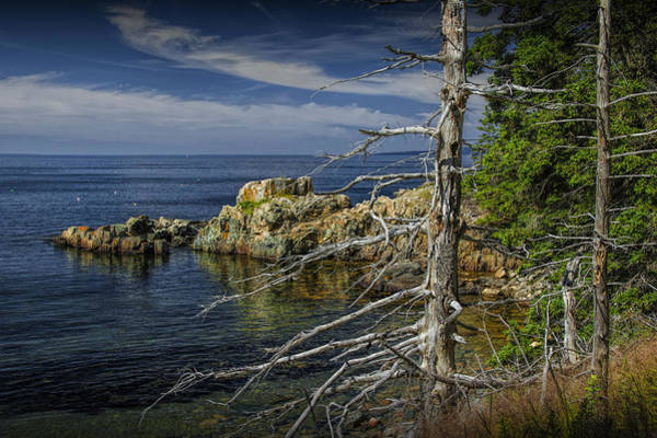 Photograph - Rock Formations And Trees On The Shoreline In Acadia National Park by Randall Nyhof