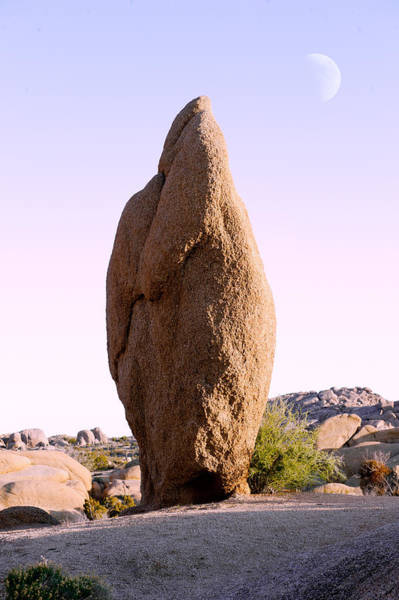 Wall Art - Photograph - Rock Formations At Joshua Tree National by Panoramic Images