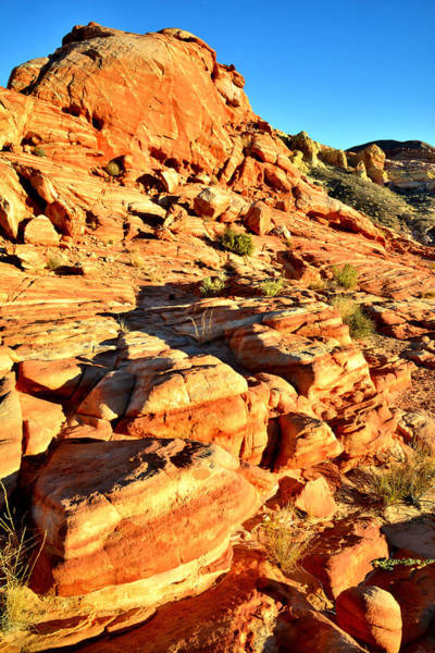 Photograph - Rock Garden - Valley Of Fire by Ray Mathis