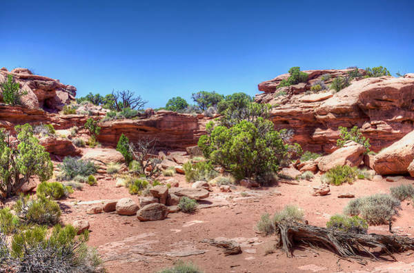 Wall Art - Photograph - Rock Garden by William Wetmore