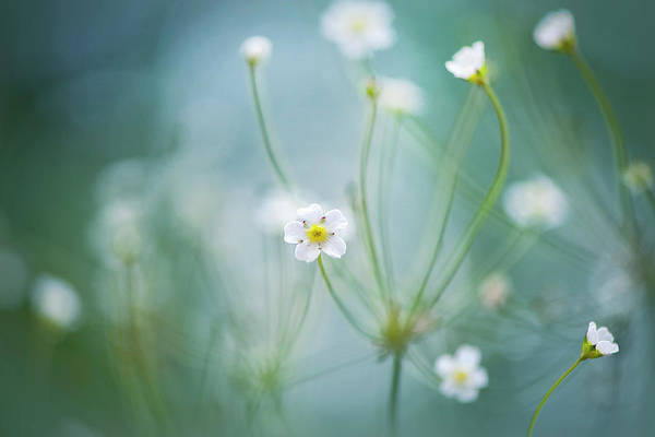 Wildflowers Photograph - Rock Jasmine by Jacky Parker