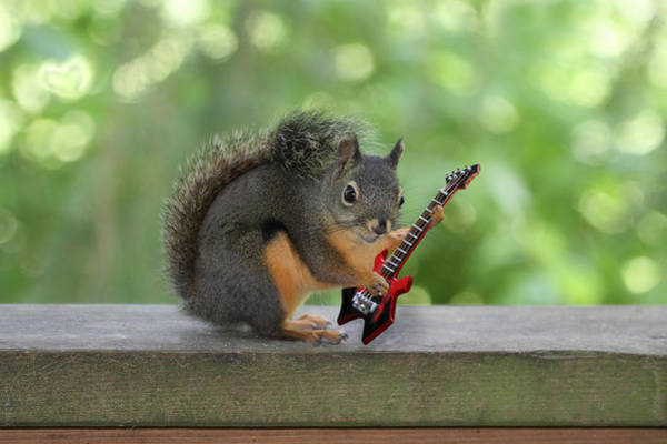 Photograph - Rock 'n Roll Squirrel by Peggy Collins