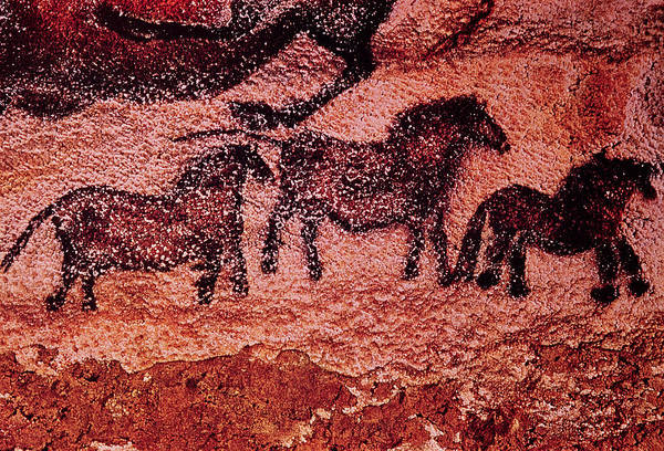 Prehistoric Photograph - Rock Painting Of Tarpans Ponies, C.17000 Bc Cave Painting by Prehistoric