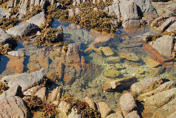 Seaweed Photograph - Rock Pool by Tony Craddock/science Photo Library