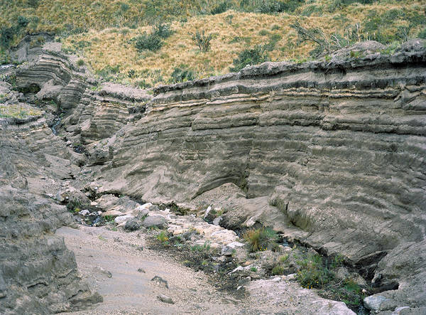 Gully Photograph - Rock Strata by Dr Morley Read/science Photo Library
