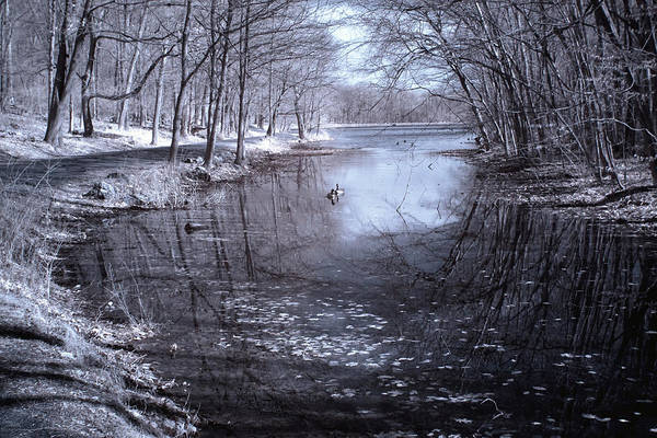 Photograph - Rockefeller Swan Lake by Dave Beckerman