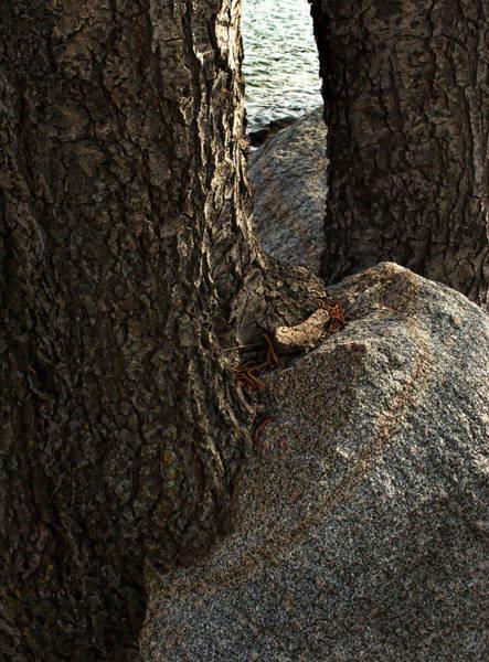 Rockin Tree Art Print