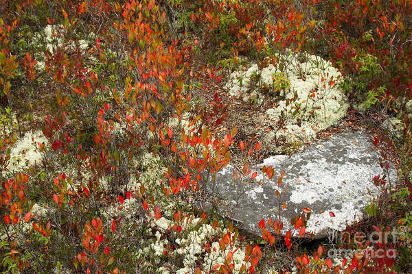 Photograph - Rocks And Lichens by Chris Scroggins