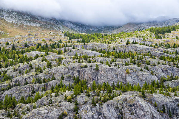 Photograph - Rocks And Trees - Alpine Scenery In The Swiss Alps Switzerland by Matthias Hauser