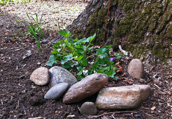 Wall Art - Photograph - Rocks By The Tree by Janis Beauchamp