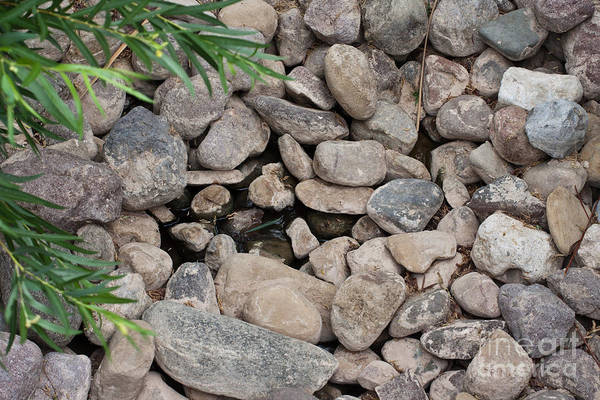 Photograph - Rocks In A Pond With Water And Leafs by Gunter Nezhoda