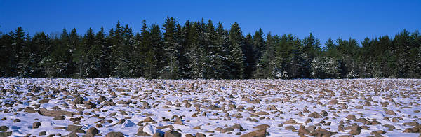 Poconos Wall Art - Photograph - Rocks In Snow Covered Landscape by Panoramic Images
