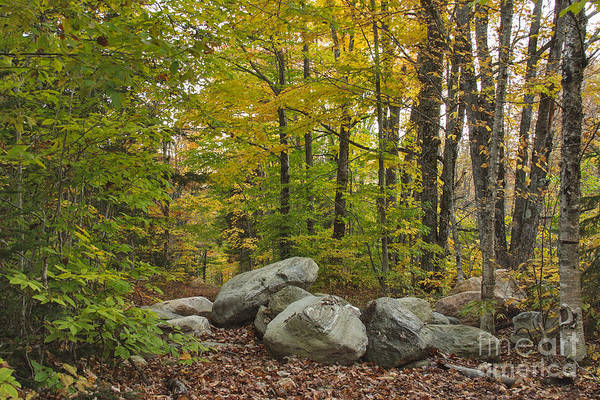 Photograph - Rocky Forest Path by Charles Kozierok