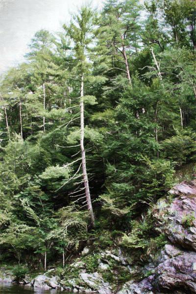Photograph - Mountain - Landscape - Trees - Rocky Hillside by Barry Jones