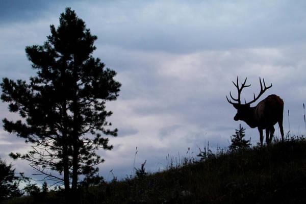 Archer Photograph - Rocky Mountain Bull Elk At Dusk by Ken Archer